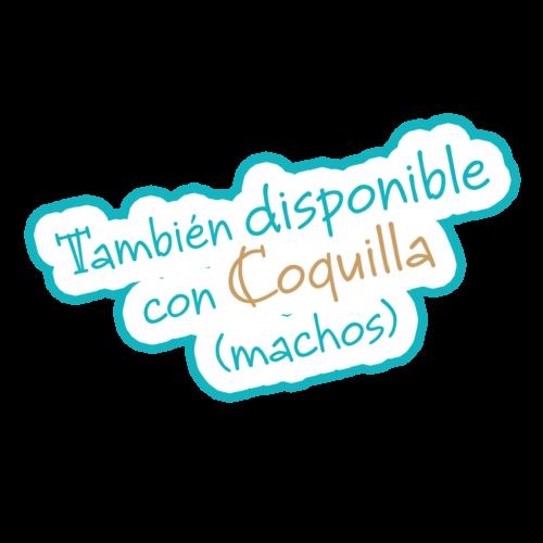 coquilla-400x400