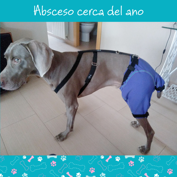 absceso1