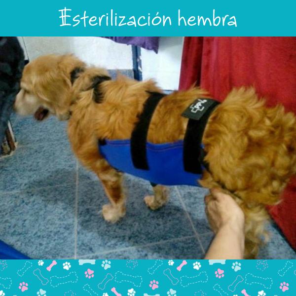 esterilizacion-hembra-2