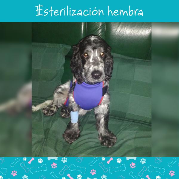 esterilizacion-hembra-3
