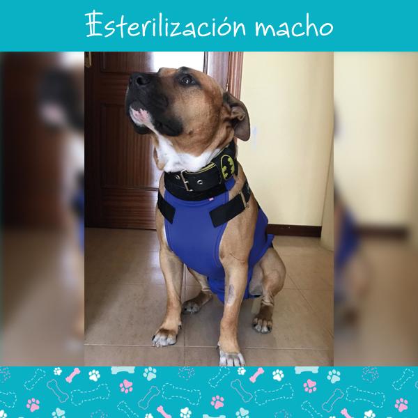 esterilizacion-macho-1