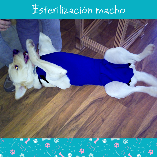 esterilizacion-macho-2