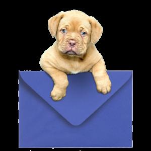 perro-sobre-contacto-ppv